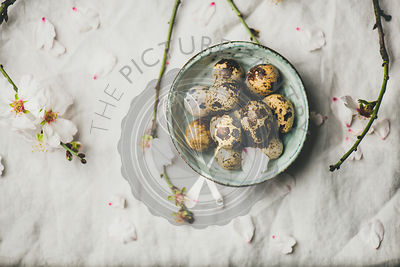 Easter flat-lay with quail eggs, almond tree branches with flowers