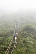 Tourist climbing Mount Sabyinyo, volcano in the Virunga Mountains, Mgahinga Gorilla National Park, Uganda