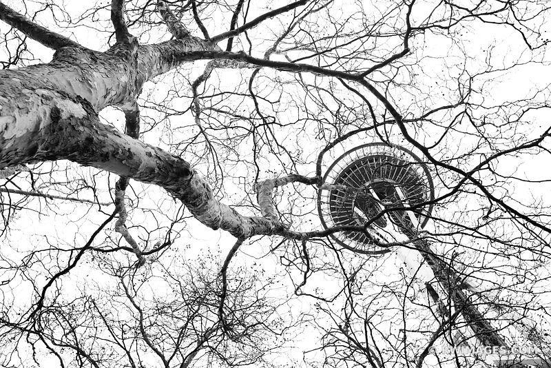 SEATTLE SPACE NEEDLE AND WINTER TREES BLACK AND WHITE