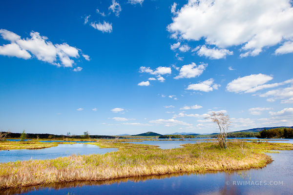 RAQUETTE RIVER MARSH GRASSES ADIRONDACK MOUNTAINS COLOR