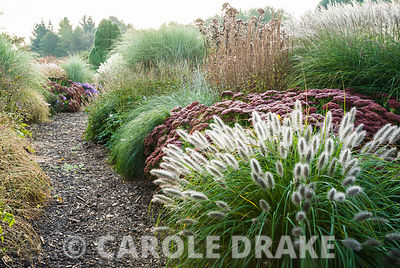Recent planting combines grasses with bold perennials in colour themed borders of silver, cerise and purple. Pennisetum alopecuroides 'Hameln', Sedum spectablile 'Autumn Joy' are backed by taller miscanthus including M. sinensis 'Morning Light'. Lady Farm, Chelwood, Somerset, UK