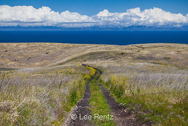 Smugglers Road on Santa Cruz Island in the Channel Islands