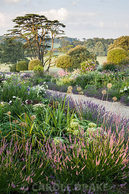 Summer borders in the Millennium Garden designed by Xa Tollemache are edged with Lavandula × intermedia 'Grosso' and feature clipped holm oaks, Quercus ilex, Verbena bonariensis, sedums and echinops. Castle Hill, Barnstaple, Devon, UK