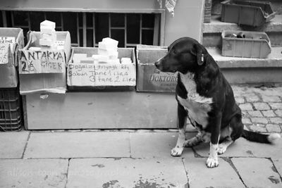Kind and friendly street dog near the spice market, Istanbul