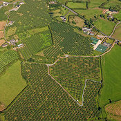 Loughgall Orchards, Armagh