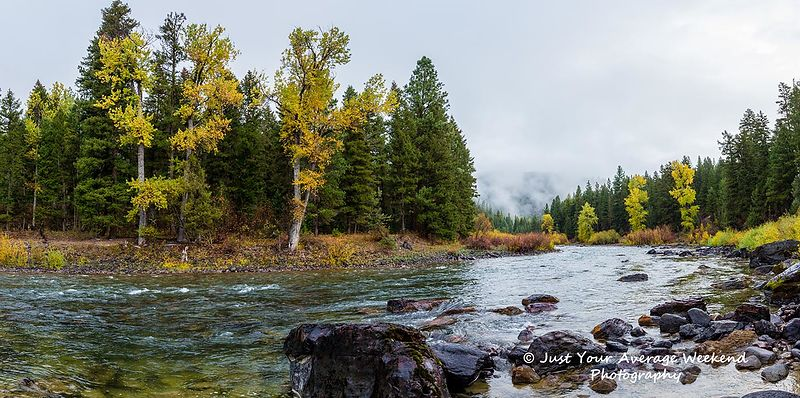 Blackfoot River Cottonwoods