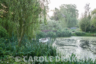 Lake edged with hostas and primulas contains small rowing boat below a weeping willow tree. Westonbury Mill Water Garden, Pembridge, Herefordshire, UK