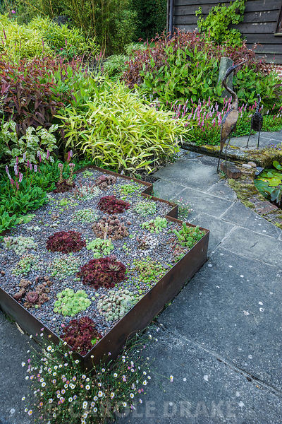 The Carpet Garden includes raised beds edged with rusted steel planted with sempervivums in reds and greens, and surrounded by persicarias and bamboos. Dipley Mill, Hartley Wintney, Hants, UK