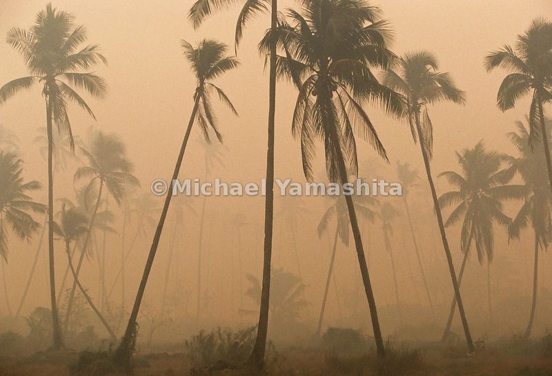 The haze makes the palm trees more difficult to see than if it were a clear day.
