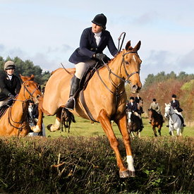 12th November with the Surrey Union Hunt photos