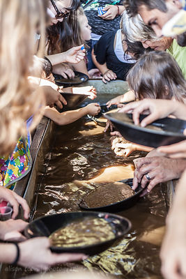 Panning for gold, Gold Rush Days 2016