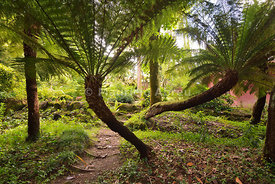 Ferns in the Condessa d'Edla Gardens. Sintra mountain range, Sintra-Cascais Natural Park. Portugal (no property release)