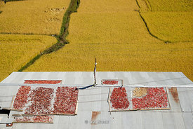 Rice field and dried peppers in Paro District, Bhutan.