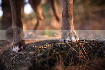 closeup stock photograph of dog paws on log in forest