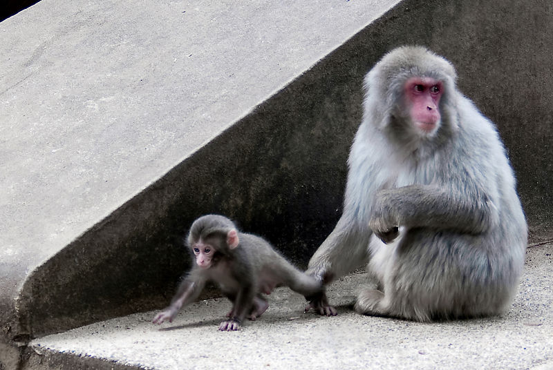 Here you! - Mom Macaque and her little one