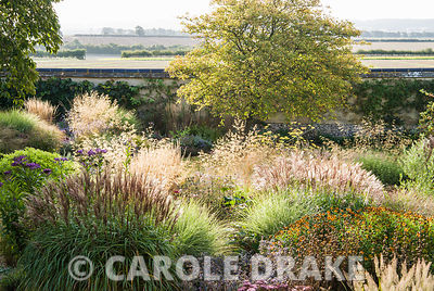 The garden at Broughton is dominated by bold clumps of grasses including Calamagrostis x acutiflora 'Karl Foerster', Stipa gigantea and Molinia 'Transparent' interspersed with perennials, such as heleniums, purple sage, salvias and Sedum telephium 'Matrona'. Broughton Buildings, Broughton, nr Stockbridge, Hants, UK