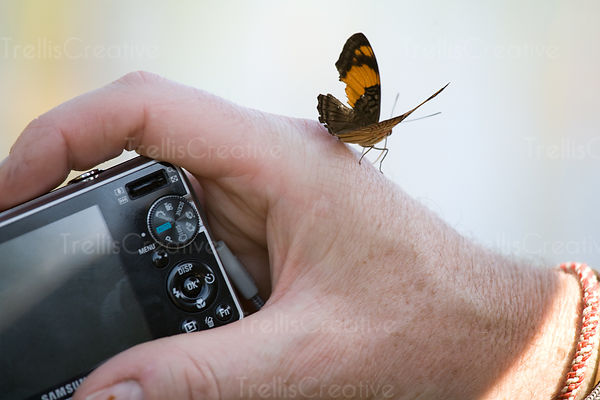 Butterfly lands on a man's hand