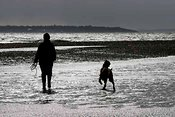 Owner and irish setter on beach