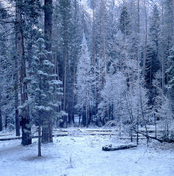 035-California_CA141058_Yosemite_Snow_Storm_008_Preview