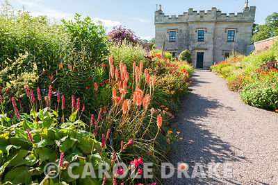 Hot borders packed with oranges, reds, yellows and pink including Kniphofia 'Timothy', achilleas, heleniums, crocosmias and alstroemerias. Floors Castle, Kelso, Roxburghshire, Scotland