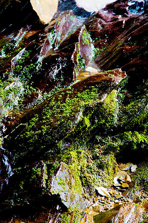 NATURE ABSTRACT GROTTO FALLS SMOKY MOUNTAINS