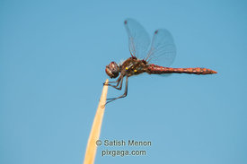 Dragon Fly, San Jose, CA, USA