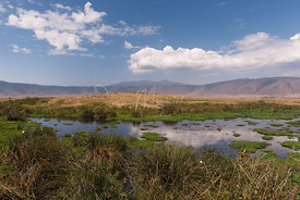 A close view on Ngorongoro
