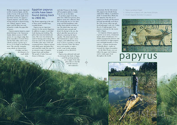 the papyrus spread from the 'Plants of Eden' book with the Eden Project