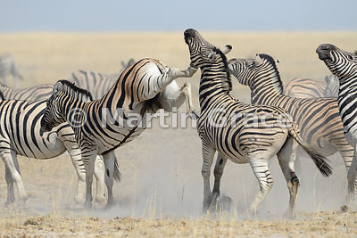 Etosha National Park photos
