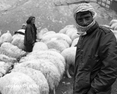 The Palestinian Bedouins