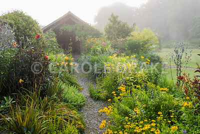 Path framed with borders full of yellows and reds including Helenium 'Butterpat', delicate yellow daisy Madia elegans, dahlias and daylilies. The Cider House, Buckland Abbey, Yelverton, Devon, UK
