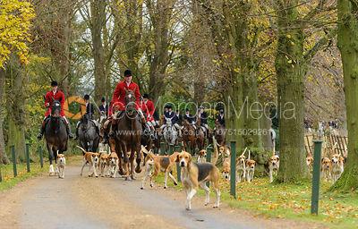 The Belvoir Hunt at Scalford Hall 16/11 photos