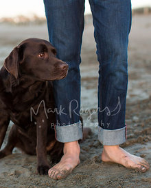 Chocolate Labrador on beach next to mans legs