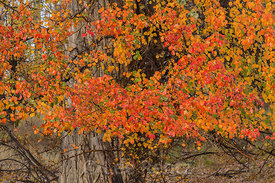Vivid Autumn Color at P Ranch in Malheur National Wildlife Refuge