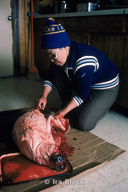 A local native of the Eskimo village in Little Diomede, skinning and gutting a seal. This is hunter-gathering territory- a physical setting and a way of life evoking the Ice Age of long ago.