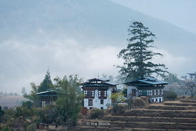 Morning view of terraced fields in Punakha, Bhutan.