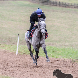 Gallops 06/01 photos