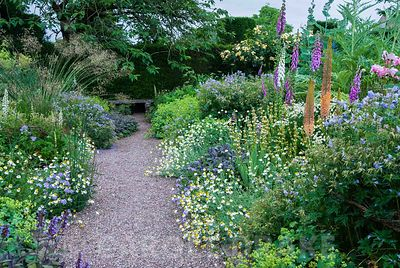 Herbaceous borders at Cothay Manor, Somerset, containing repeated clumps of purple sage, Anthemis punctata sp cupaniana, Sisyrinchium striatum, Geranium pratense 'Mrs Kendall Clark' and Alchemilla mollis punctuated by foxgloves, foxtail lilies, verbascum and graceful Stipa gigantea