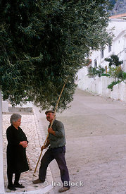 Man picks olives from his mother's olive tree