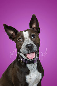 Black and White Pitfall Mix Against Purple Studio Background