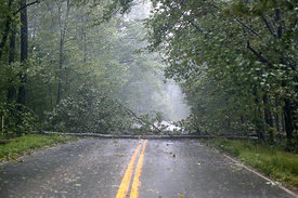 Tree down from Hurricane Isabel on Robius Road