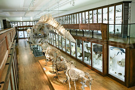 Musee d'Histoire naturelle