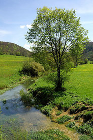 Rivière au printemps Nancray Doubs 04/05