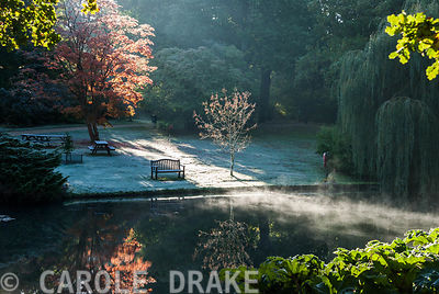 Early morning sun illuminates autumn trees around the Jubilee Pond. Exbury Gardens, Exbury, Hants, UK