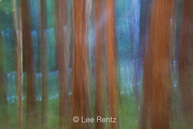 Impressionistic Forest and Royal Creek in Olympic National Park