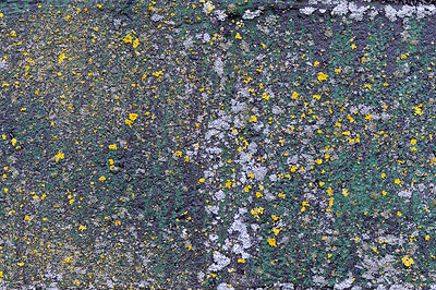 Lichen on warehouse wall