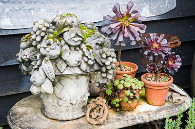 A decorative arrangement of plants, containers and objects against black weatherboarding including Aeonium 'Zwartkop' and a stone carving of a pot overflowing with fruit and flowers.