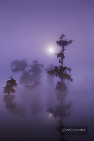 Bald cypress forest (taxodium distichum) with full moon in fog - North America, USA, Louisiana, St. Martin, Lake Martin - digital