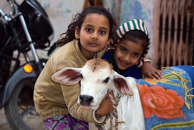 Two girls and their baby cow, Pushkar, Rajasthan, India