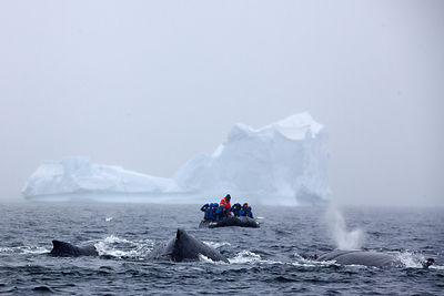 Whale Watching Antarctica photos